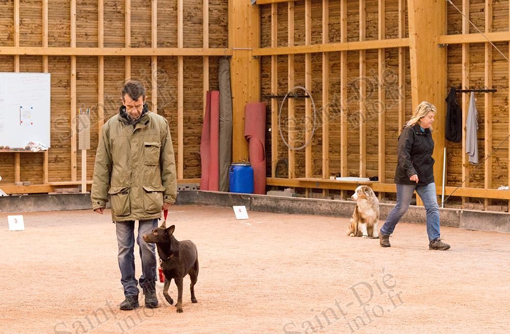 Concours_Obéissance_Canine_02