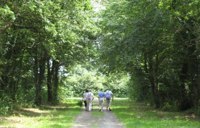 Promenade_Forêt