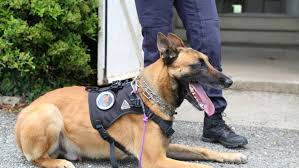 Gendarmerie_Equipe_Cynophile