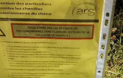 Frapelle_Chenilles_Processionnaires