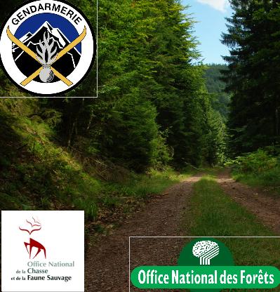 Opération_Coordonnée_Forêt