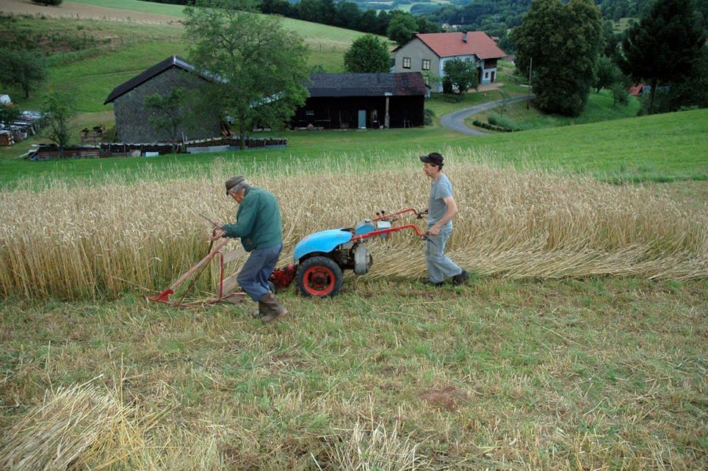 Aux_Sources_de_mes_Hautes-Vosges (2)