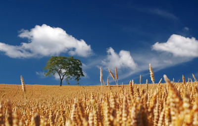 agriculture-3