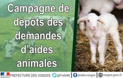 Campagne_Dépôt_Demandes_Animales