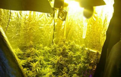 Saisie_Cannabis_01