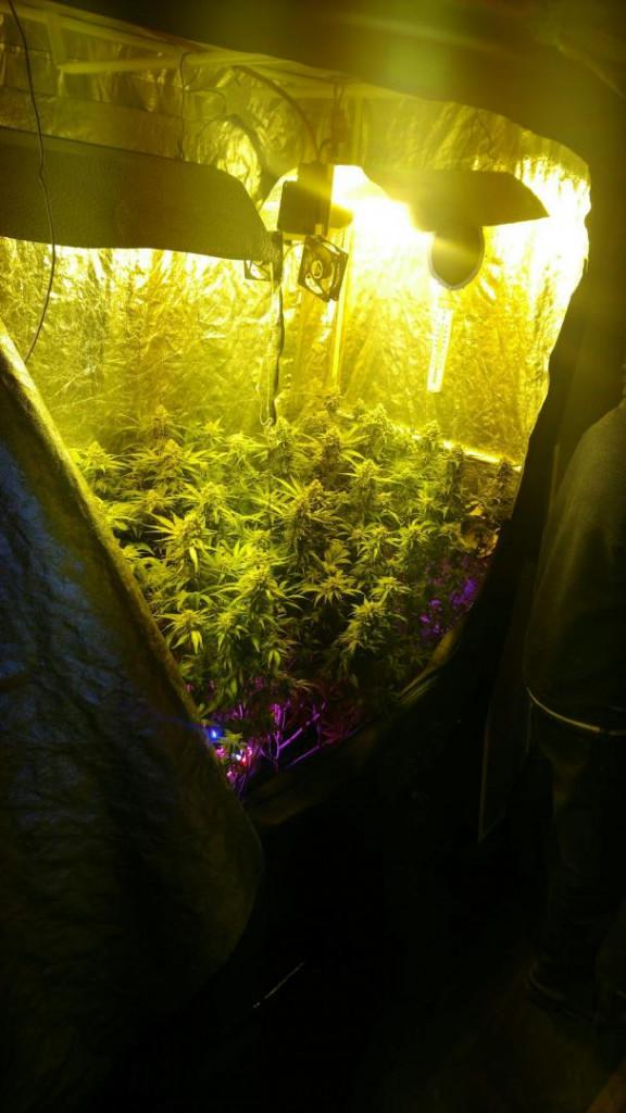 Saisie_Cannabis_02
