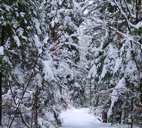 csm_hiver_Neige_et_chemin__Bruyeres_f22ca40d7a