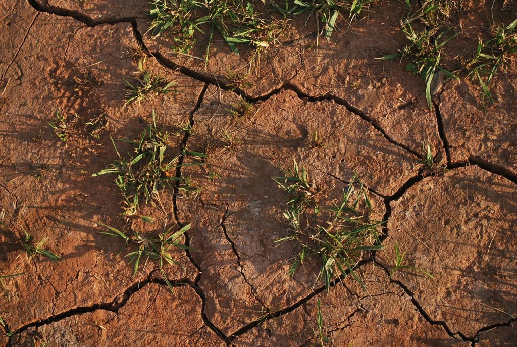 soil-15540_1280