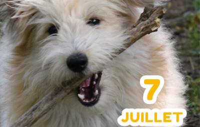 Balade_Canine_Estivale_Au_Nom_des_Animaux_01