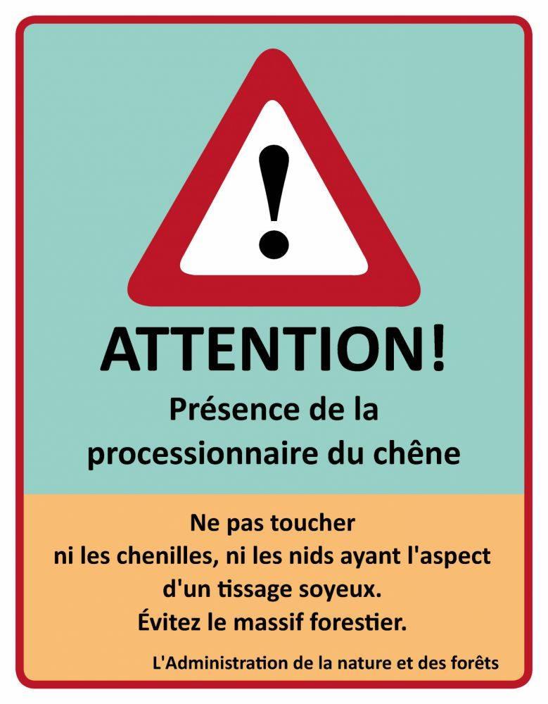 BdL-Chenilles_Processionnaires