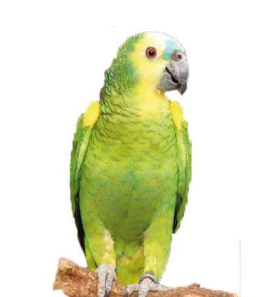 gamm vert photo perroq
