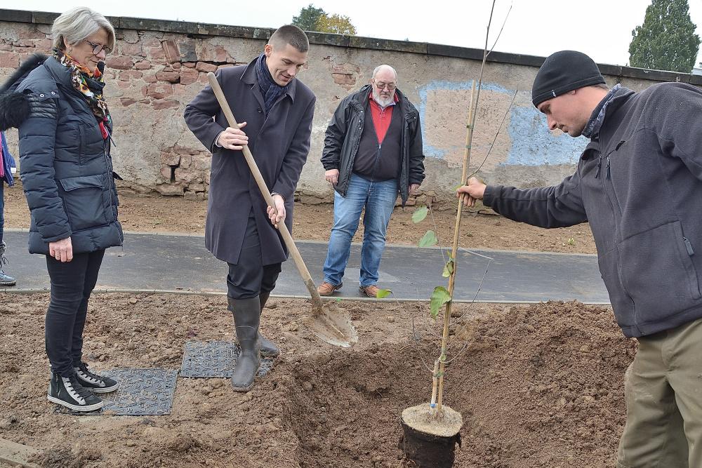 Plantation_Arbres_Rue_Rovel_Chemin_Côte_Calot (5)