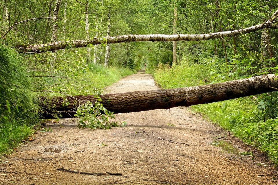 arbre-route