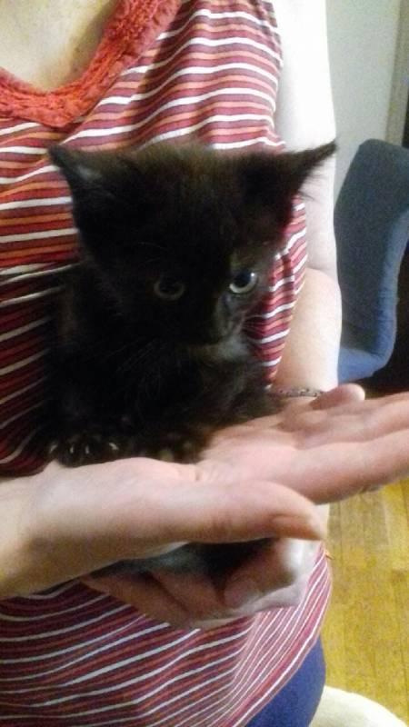 Vosges – Guizmo, un chaton de deux mois sauvé d'un égout