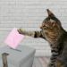 vote chat animaix 6 mesures