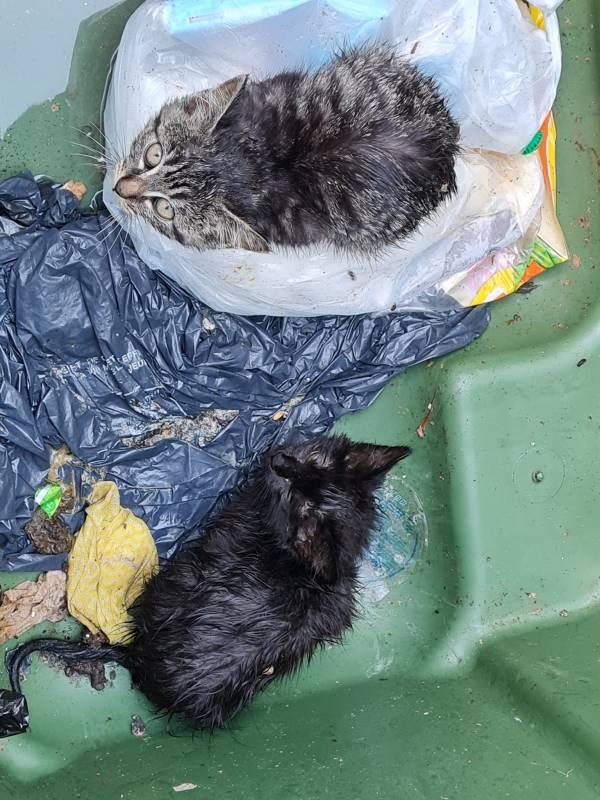 chatons-poubelle-vosges
